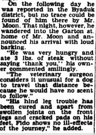 Amazing Story Of Canine Courage And Endurance. (1954, September 14). Camperdown Chronicle (Vic. : 1877 - 1954), p. 4. Retrieved December 10, 2012, from http://nla.gov.au/nla.news-article24008716