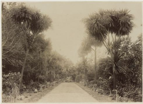 PORTLAND BOTANICAL GARDENS c1891.  Image Courtesy of the State Library of Victoria.  Image No.  H42199/21 http://handle.slv.vic.gov.au/10381/183906