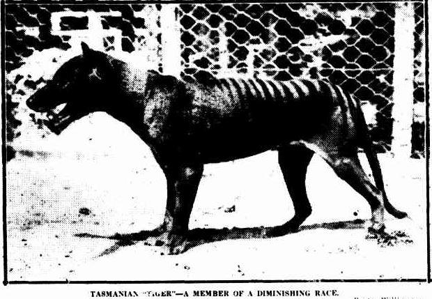 No title. (1923, June 20). The Mercury (Hobart, Tas. : 1860 - 1954), p. 5. Retrieved August 13, 2013, from http://nla.gov.au/nla.news-article23695834