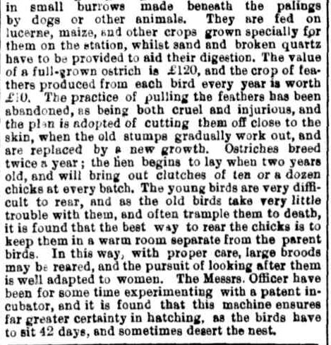 Ostrich Farming in Victoria. (1881, May 21). The Maitland Mercury & Hunter River General Advertiser (NSW : 1843 - 1893), p. 6 Supplement: Second Sheet to The Maitland Mercury. Retrieved October 2, 2013, from http://nla.gov.au/nla.news-article817426