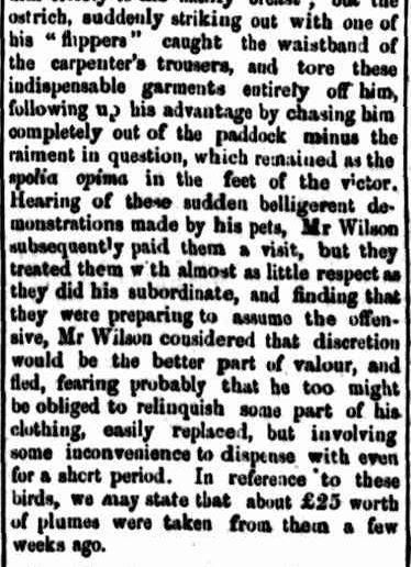 MISCELLANEOUS. (1868, November 16). Portland Guardian and Normanby General Advertiser (Vic. : 1842 - 1876), p. 3 Edition: EVENINGS. Retrieved October 2, 2013, from http://nla.gov.au/nla.news-article64691135