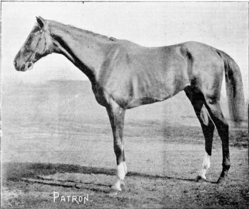 PATRON, 1894 MELBOURNE CUP WINNER, Image Courtesy of the State Library of Victoria. Image no.  IAN08/11/94/20-21e  http://handle.slv.vic.gov.au/10381/254730