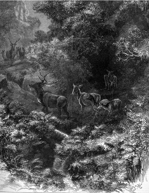 DEER IN THE GRAMPIANS.  Imprint by Alfred May and Alfred Martin Ebsworth,(1881) Image Courtesy of the State Library of Victoria.  Image no. A/S31/12/81/420 http://handle.slv.vic.gov.au/10381/258236