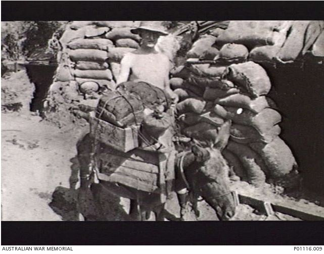 Image Courtesy of the Australian War Memorial. Image No. P01116.009 http://www.awm.gov.au/collection/P01116.009