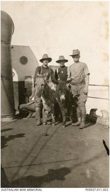 DONKEYS ABOARD THE HMT ASCOT EN ROUTE TO GALLIPOLI, APRIL 1915 P05927.011.002http://www.awm.gov.au/collection/P05927.011.002