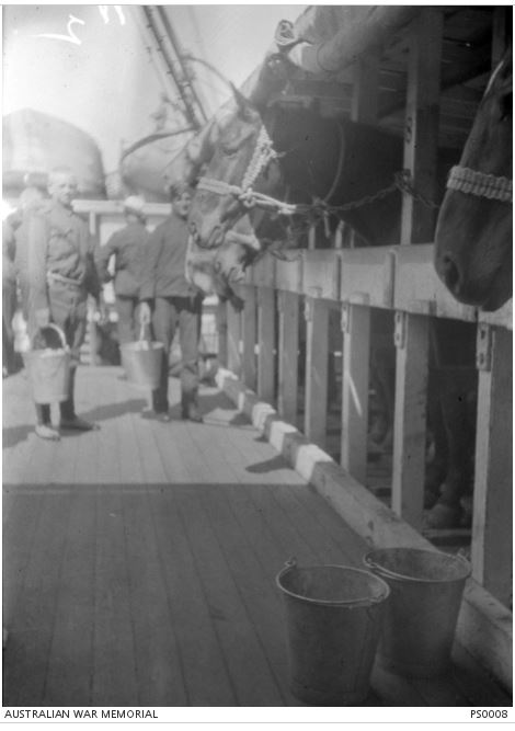 FEEDING HORSES OF THE 4TH LIGHT HORSE ON BOARD HMAT WILTSHIRE. Image Courtesy of the Australian War Memorial. Image no. PS0008 http://www.awm.gov.au/collection/PS0008/