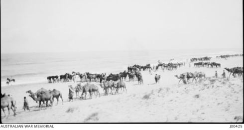 4th LIGHT HORSE REGIMENT BATHING HORSES & CAMELS,  MARAKEB, PALESTINE, 1917.  Image Courtesy of the Australian War Memorial Image No. J00425 http://www.awm.gov.au/collection/J00425/