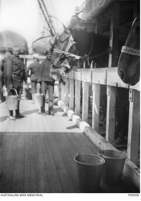 HORSES & MEN OF THE 4TH LHR ABOARD A18 SS WILTSHIRE, OCTOBER 1914. Image courtesy of the Australian War Memorial. Image no. PS0008. https://www.awm.gov.au/collection/PS0008/