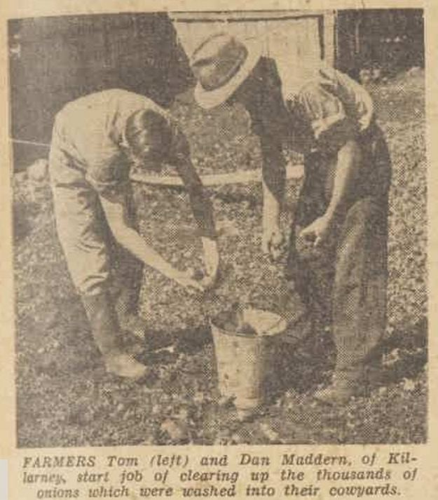 """""""Green pastures and hard work after floods"""" The Australian Women's Weekly (1933 - 1982) 6 April 1946: ."""