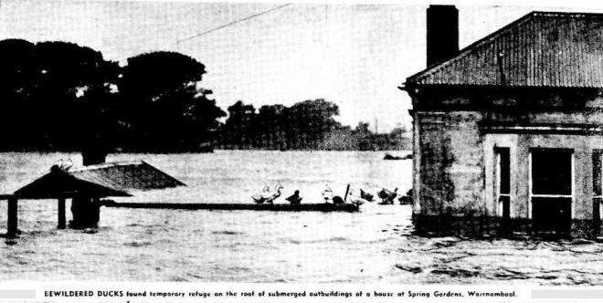 """""""Flood Pictures From Inundated Western District"""" The Argus (Melbourne, Vic. : 1848 - 1957) 19 March 1946: ."""