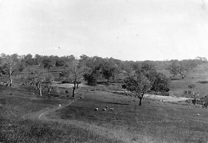 """Merino Downs"" Image courtesy of the Museum Victoria Collections http://collections.museumvictoria.com.au/items/766481"