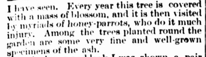 """IN THE WANNON COUNTRY."" The Australasian (Melbourne, Vic. : 1864 - 1946) 3 January 1891: ."